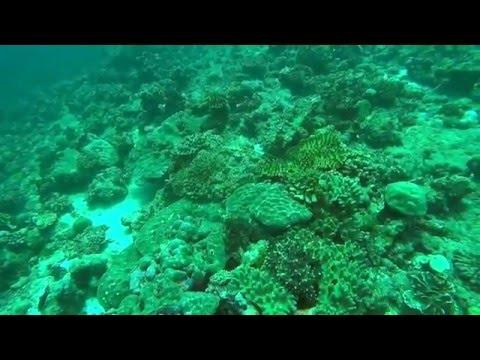Maldivas Norte 2016 corto