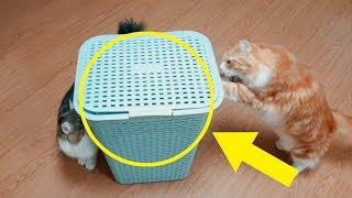 고양이 포획기 사용법 (바로 들어옴ㄷㄷ) | 딩셉션
