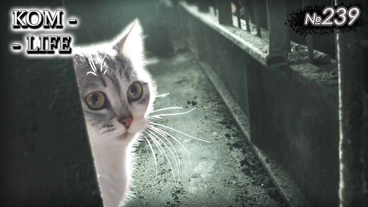 В сарае появилась кошечка...