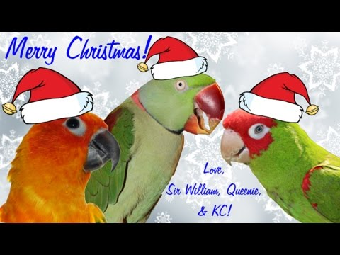A Very Parrot Christmas!