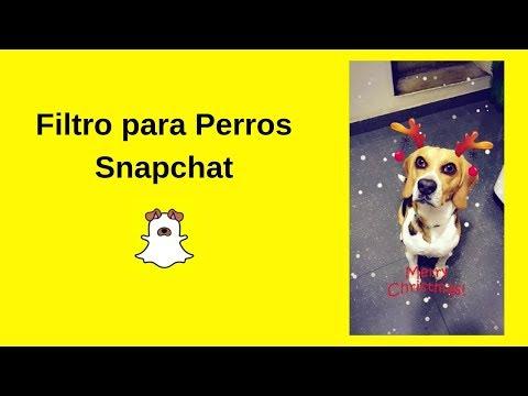 Snapchat | Llegaron Los Filtros Para Perros