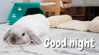 My Bunny Night Time Routine