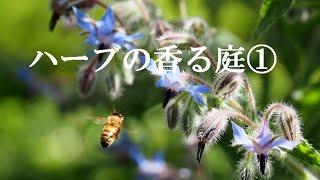 ハーブの香る庭~♪
