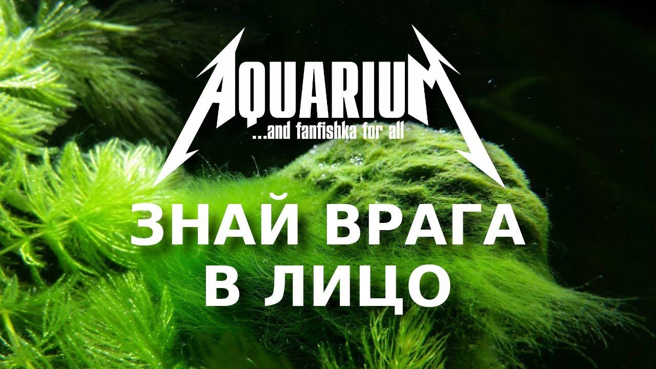 Водоросли в аквариуме: знай врага в лицо!