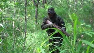 Tiger Stripe Camouflage Effectiveness