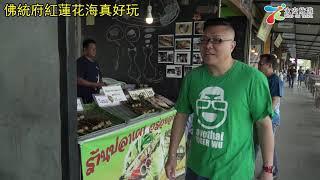 曼谷周邊遊:佛統府紅蓮花海真好玩!