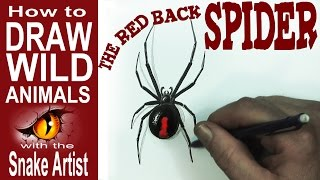 How to Draw  the Red Back Spider (beginner)- Spoken Tutorial