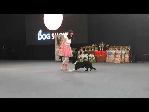 FEHOVA Winter Dog Show Joeyka 2. Dog Dancing Fellépése 2019. 02. 19.