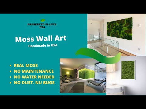 preserved-moss-frame-wall-art- -real-preserved-moss-ready-to-hang