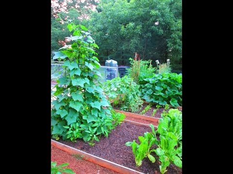 Organic Gardening: Tips On Growing Cucumbers On A Trellis ~ Garden Update