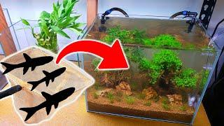 DOUBLE BONSAI TREE Nano Aquari…