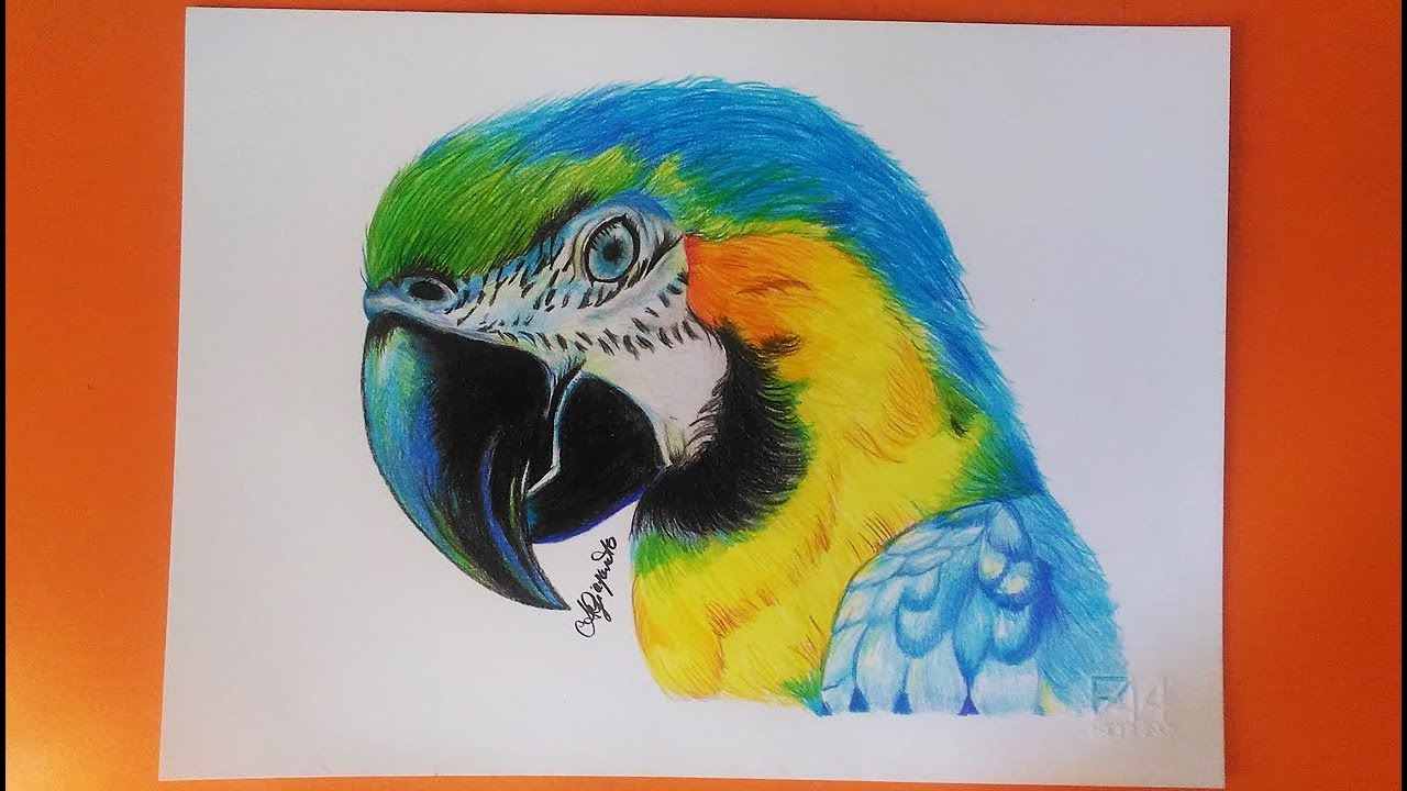Realistic Parrot Speed Drawing Pappagallo Disegno A Matita Youtube