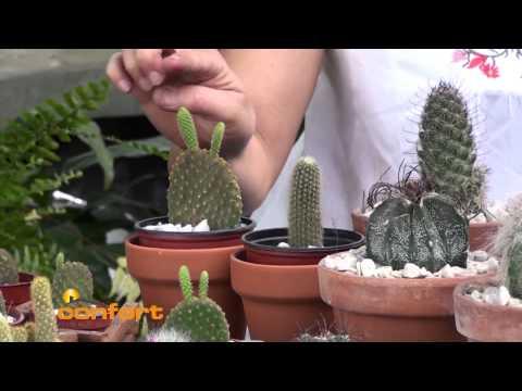 VIVERO ALEGRÍA - Cactus