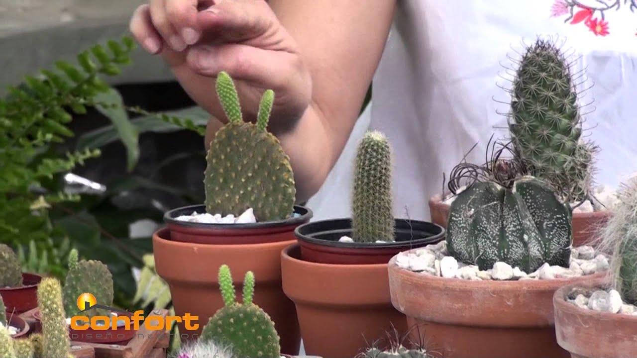 VIVERO ALEGRÍA - Cactus - YouTube - photo#25