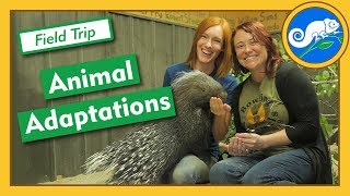 Adaptations at Animal Wonders  Field Trip