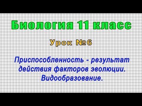 Биология 11 класс (Урок№6 - Приспособленность-результат действия факторов эволюции.Видообразование.)