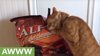 Affectionate cat can't resist snuggling with bag of food