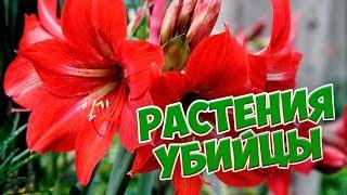 Какие цветы лучше не выращивать дома? 🌺  Растения убийцы 🌺 Будьте осторожны!