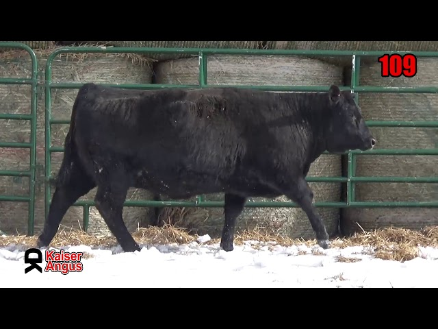 Kaiser Angus Ranch Lot 109