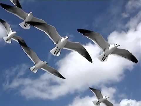Kết quả hình ảnh cho chim bay