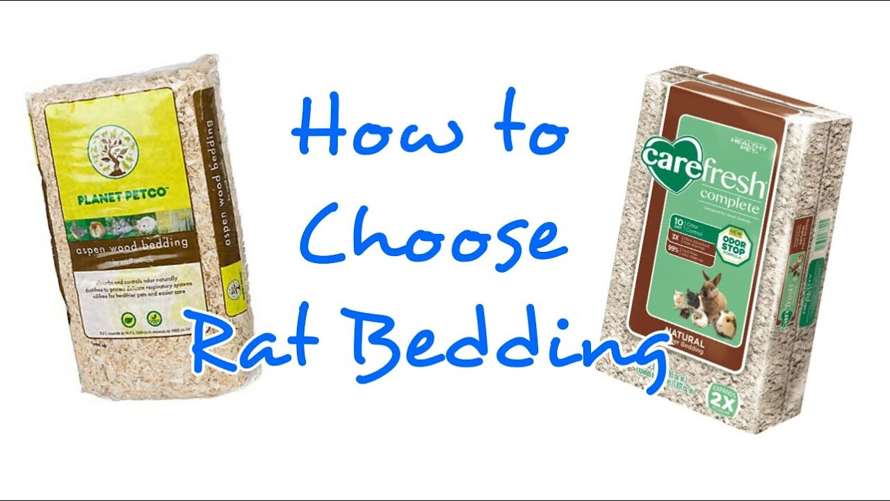 how to choose bedding for rats | rattiepedia: episode 9 - youtube