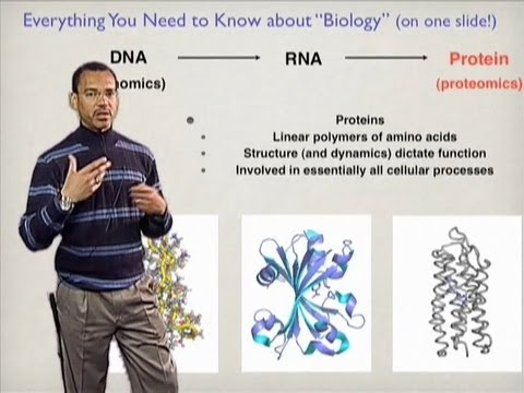 Stephen Mayo (Cal Tech) Part 1: Protein Design by Computation