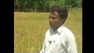 Seed Paddy Production – Sri Lanka
