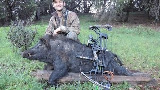 California Wild Pig Hunting