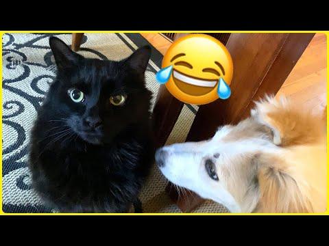 Cute Puppy meets Manx Cat! (TAILLESS CAT)