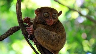 Cute monkey with big eyes (Прикольная обезьянка с огромными глазами)