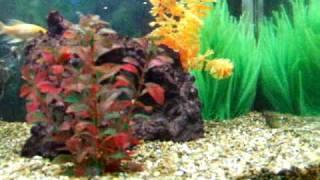 my aquarium aqua one ar 850 part 2