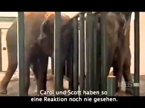 Elefanten treffen sich nach 22 Jahren wieder