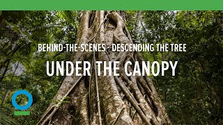 Behind-the-Scenes: Descending the Tree | Conservation International (CI)