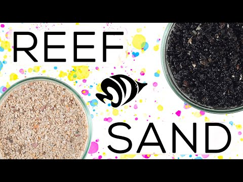 Digging Deep Into Sand: What YOU Need To Know About Substrate!