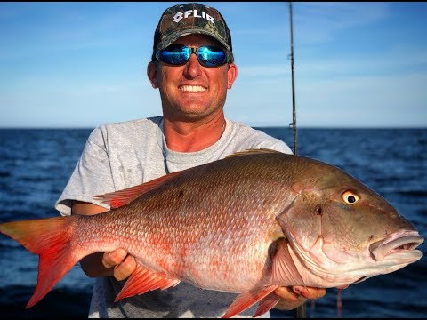 Moroccan Snapper {Catch Clean Cook} Massive Bull Shark Frenzy!!!