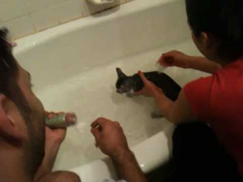 Cute Grey Egyptian Mau Kitten Gets a Bath and Chirps/Meows a lot