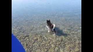 麻鈴今日も泳ぐ.