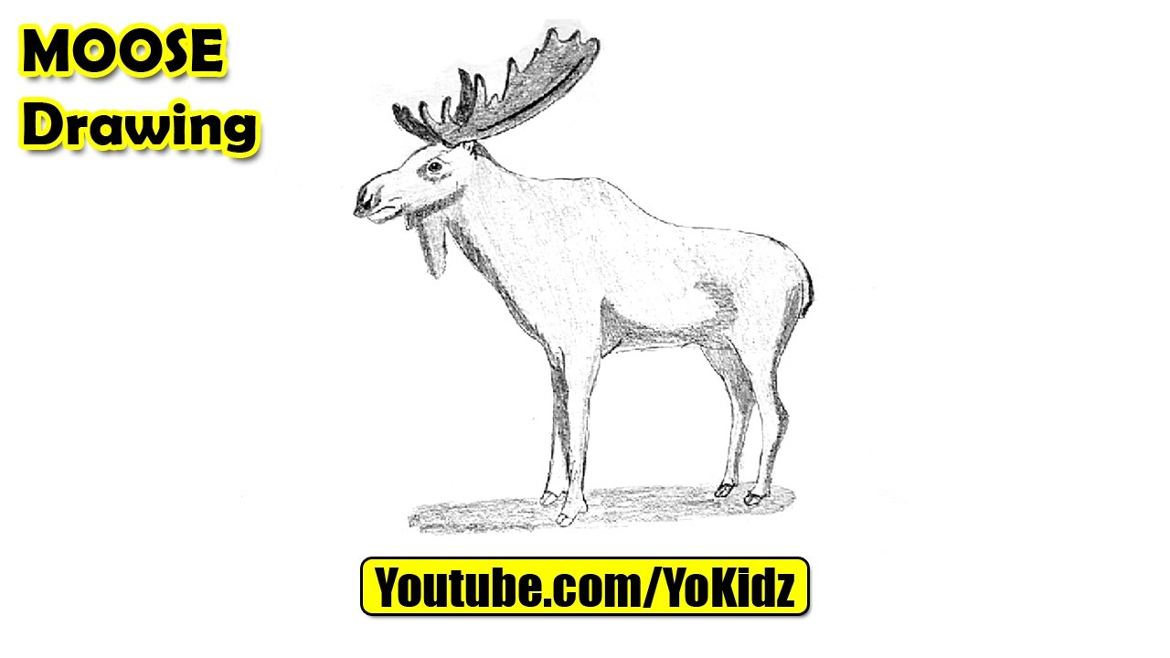 How To Draw A Moose Easy Youtube