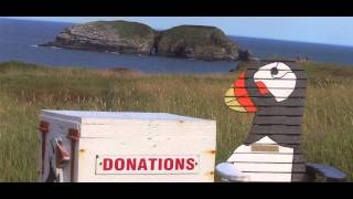 The Elliston Puffin Site - Log #2
