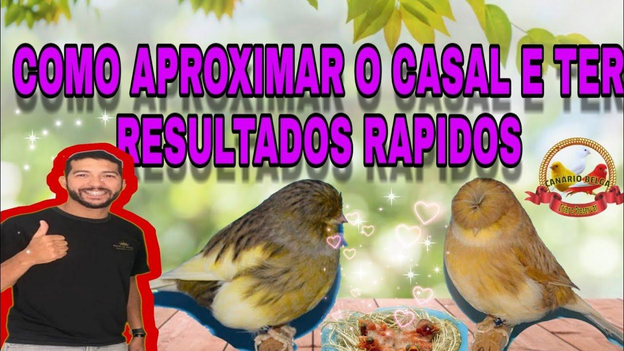 COMO APROXIMAR OS CANARIOS E TER RESULTADO RAPIDO