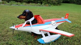 Dog Airplane Costume