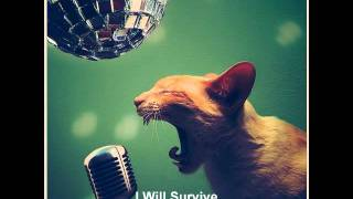 The Go-Katz - I Will Survive - Psychobilly cover of Gloria Gaynor.