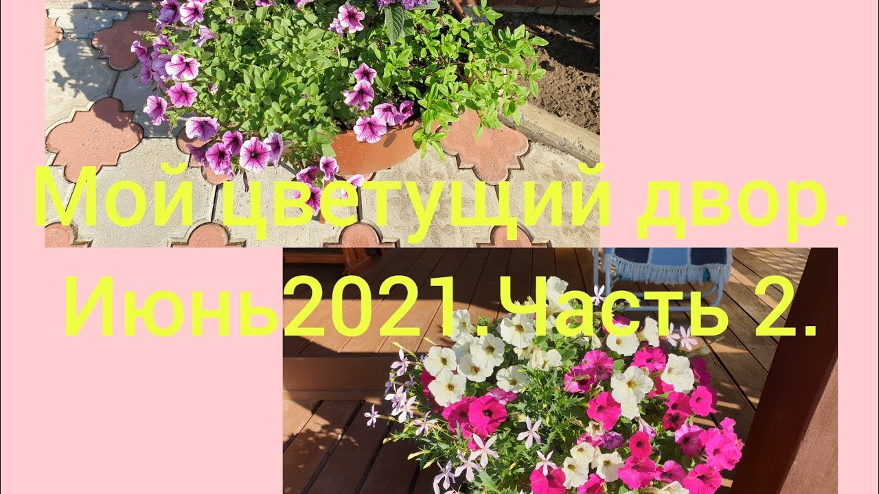 🌸🏵 Мой цветущий двор.Июнь 2021.Часть 2.