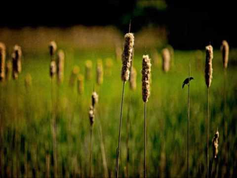 Green Grow the Rashes, O