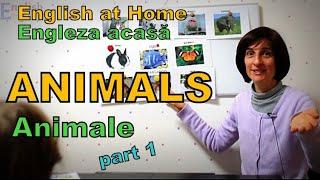 Learn English at Home - ANIMALS (Animale) - Invata Engleza acasa