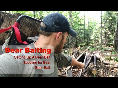 Bear Hunting Over Bait - Tips On Baiting Black Bear