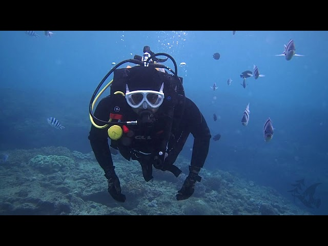 March Highlights - Gopher Diving Okinawa