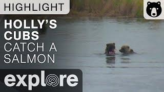 Holly's Cub Catches Salmon - Katmai National Park - Live Cam Highlight