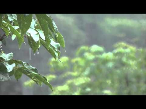 15 Minute Meditation - Rain on a Tin Roof - White Noise Rain