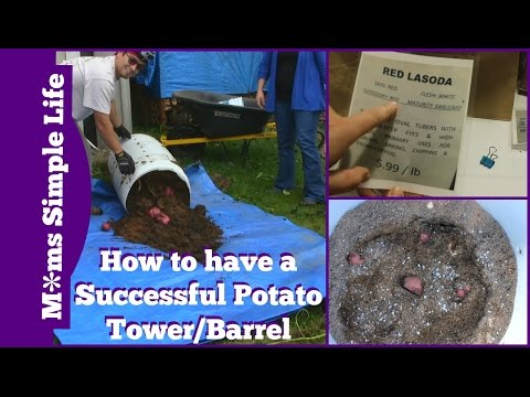 How to have a Successful Potato Tower/Barrel